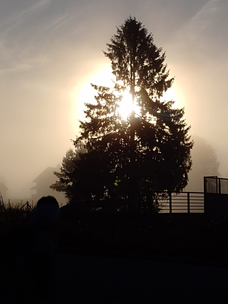 Large fir in the centre of Svenseid in mist and sun