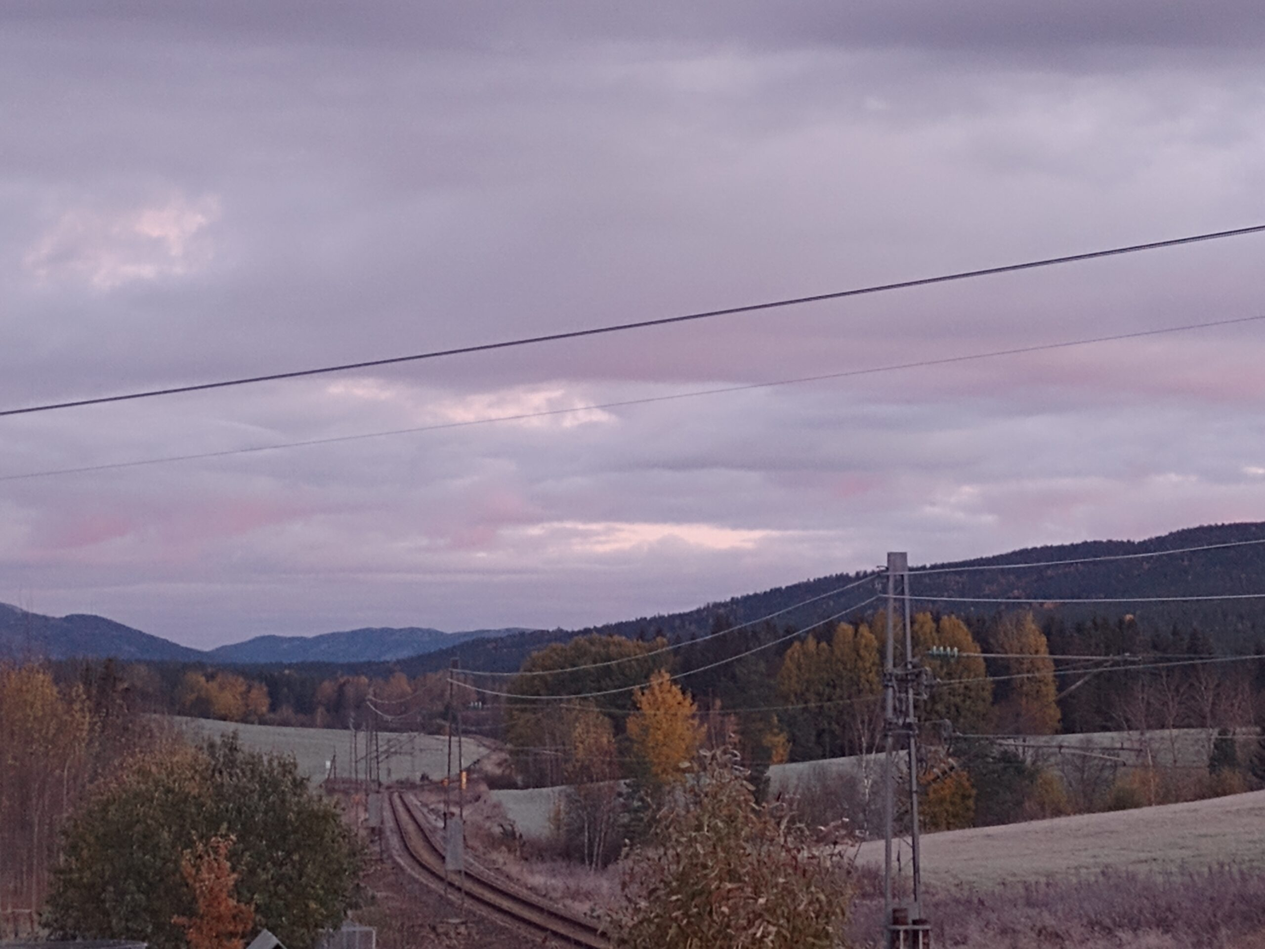Pink light looking north. Autumnal trees.